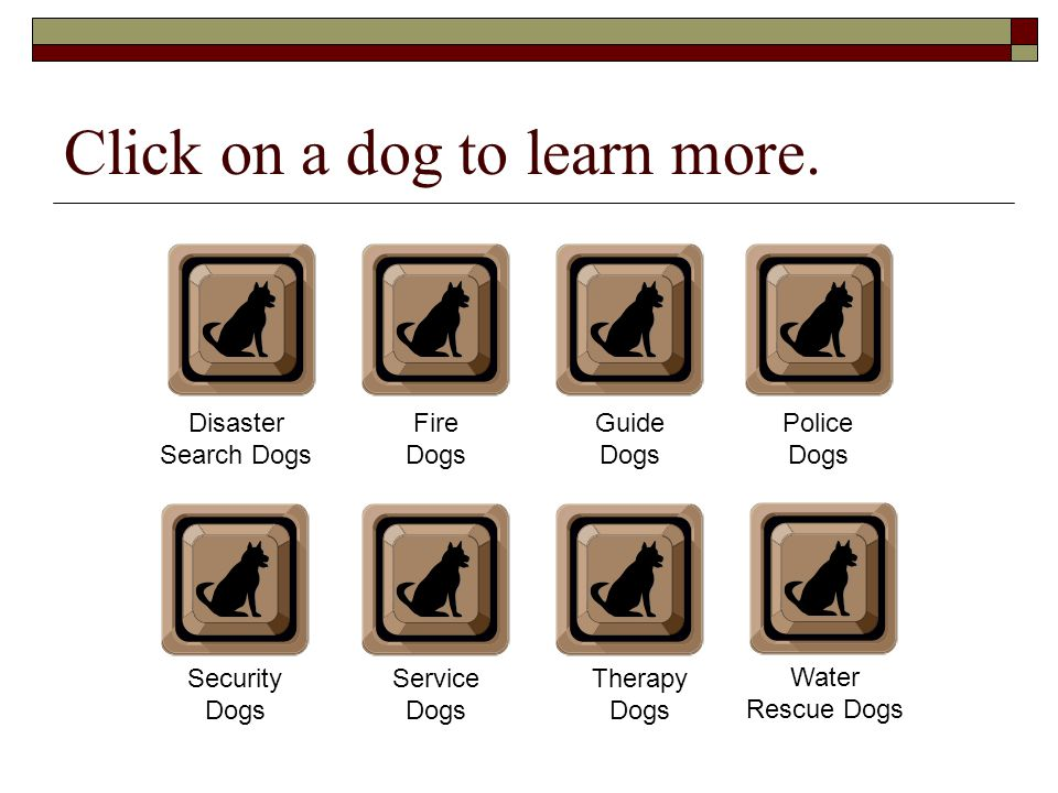 Click on a dog to learn more.