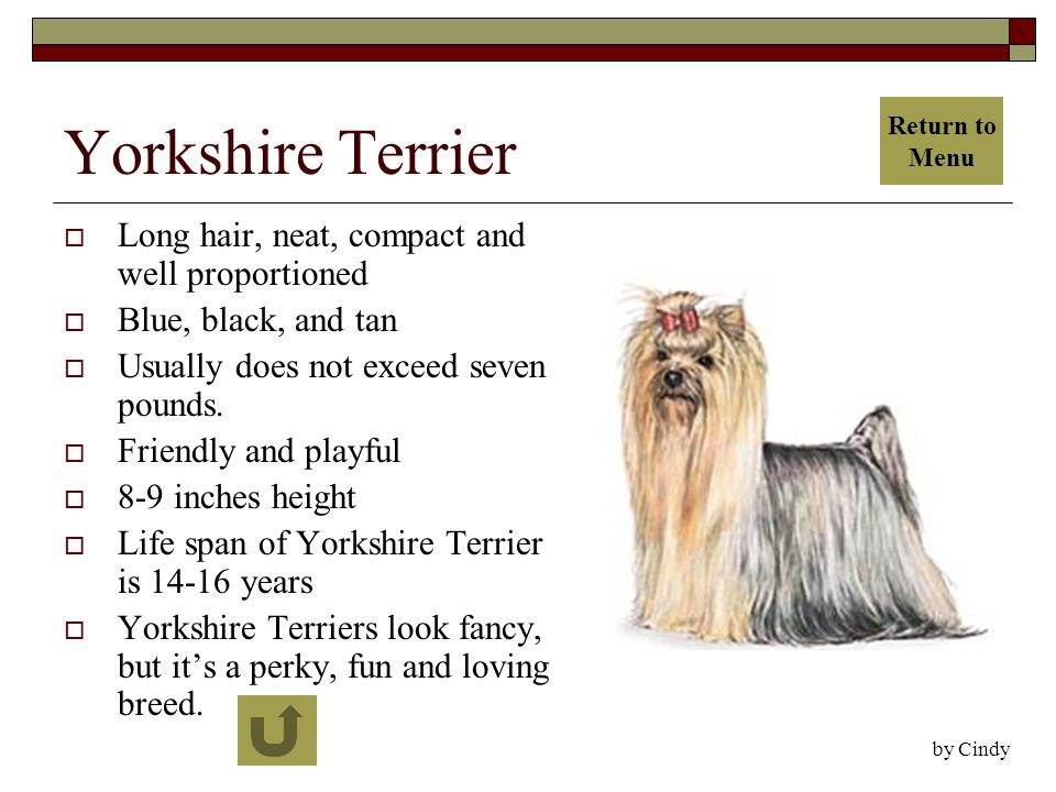 Yorkshire Terrier  Long hair, neat, compact and well proportioned  Blue, black, and tan  Usually does not exceed seven pounds.