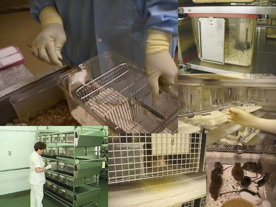 (Image) Various Types of Caging