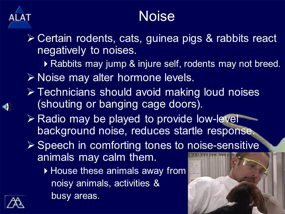 Noise  Certain rodents, cats, guinea pigs & rabbits react negatively to noises.