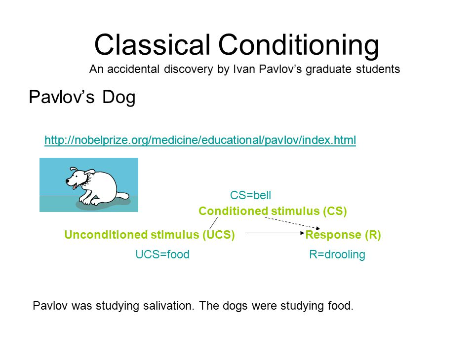 Classical Conditioning Pavlov's Dog http://nobelprize.org/medicine/educational/pavlov/index.html Unconditioned stimulus (UCS)Response (R) Conditioned stimulus (CS) R=droolingUCS=food CS=bell An accidental discovery by Ivan Pavlov's graduate students Pavlov was studying salivation.