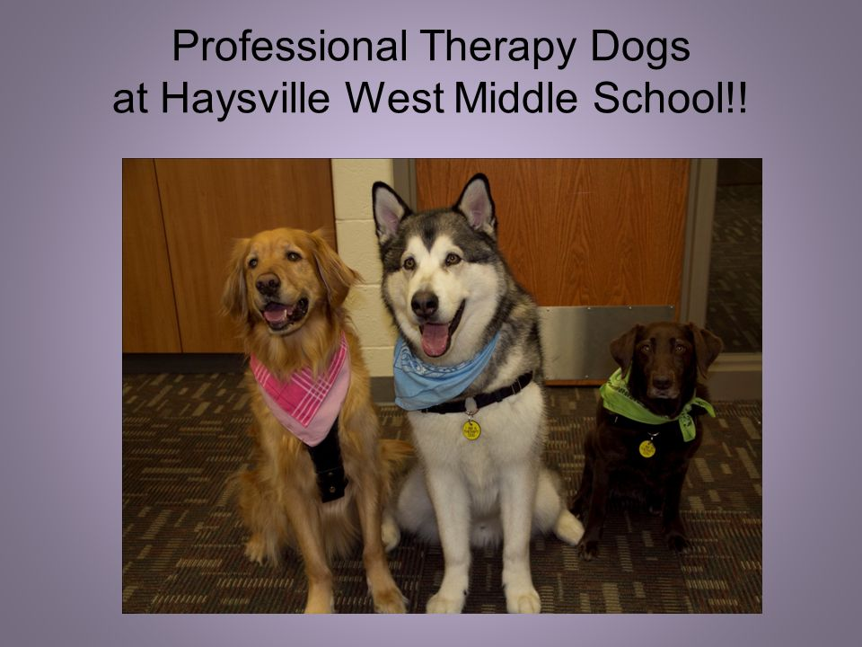 What is a Professional Therapy Dog.