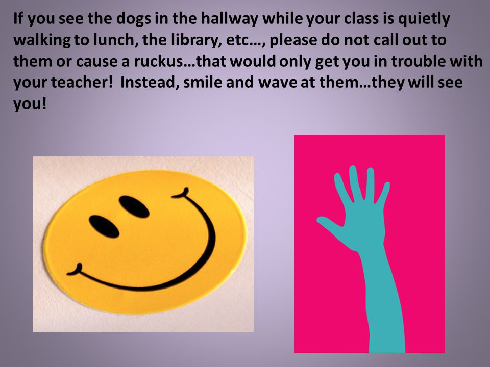 If you see the dogs in the hallway while your class is quietly walking to lunch, the library, etc…, please do not call out to them or cause a ruckus…that would only get you in trouble with your teacher.