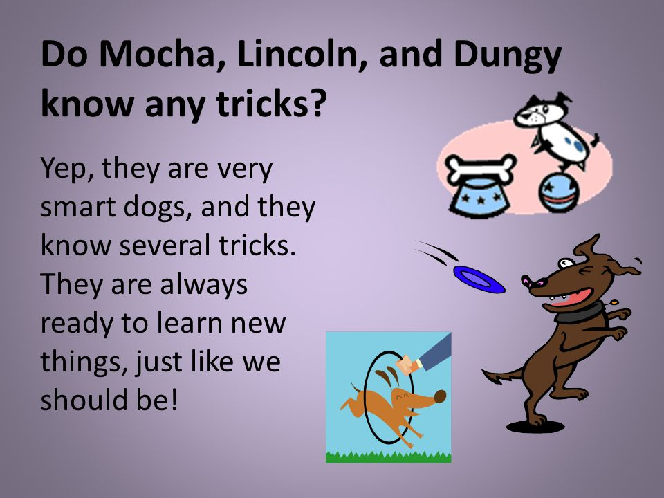 Do Mocha, Lincoln, and Dungy know any tricks.