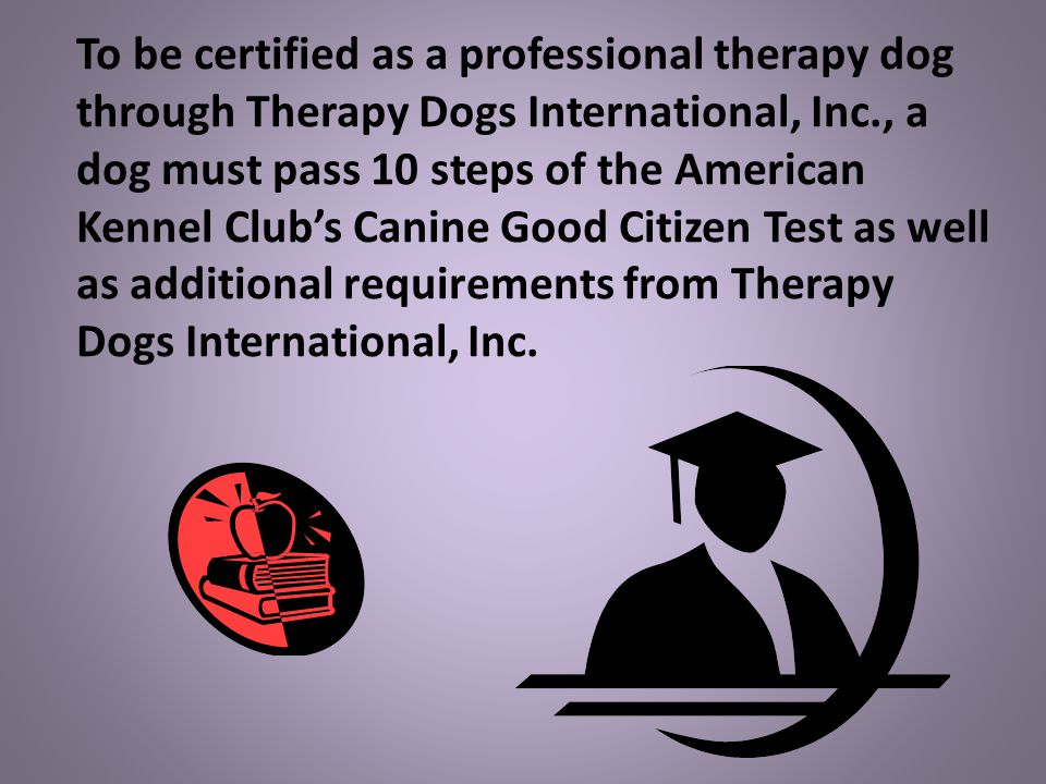 To be certified as a professional therapy dog through Therapy Dogs International, Inc., a dog must pass 10 steps of the American Kennel Club's Canine Good Citizen Test as well as additional requirements from Therapy Dogs International, Inc.