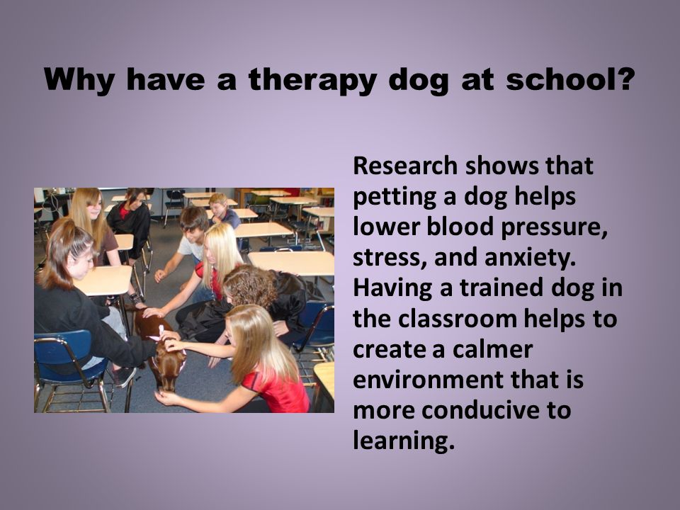 Why have a therapy dog at school.