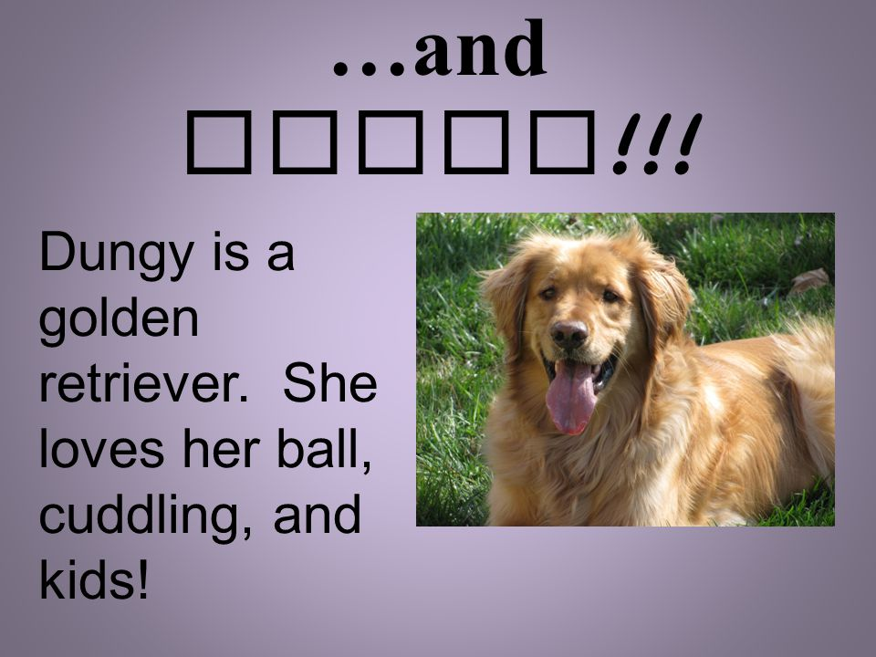 …and Dungy !!! Dungy is a golden retriever. She loves her ball, cuddling, and kids!