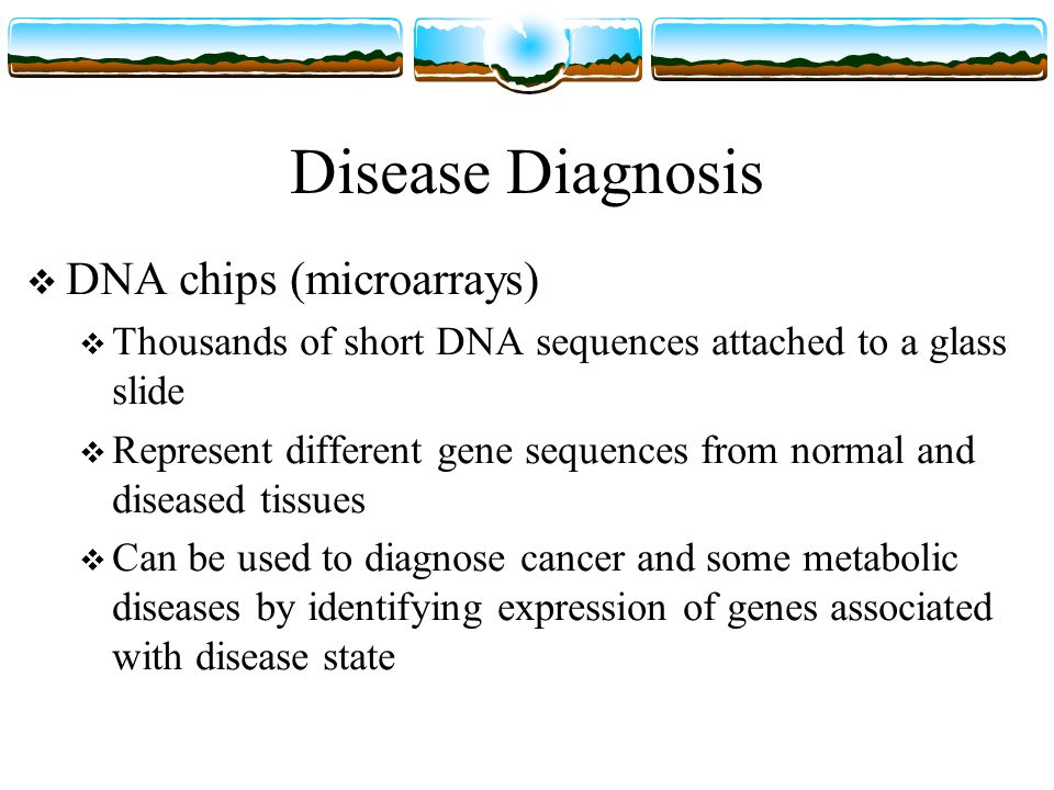 Disease Diagnosis  DNA chips (microarrays)  Thousands of short DNA sequences attached to a glass slide  Represent different gene sequences from normal and diseased tissues  Can be used to diagnose cancer and some metabolic diseases by identifying expression of genes associated with disease state
