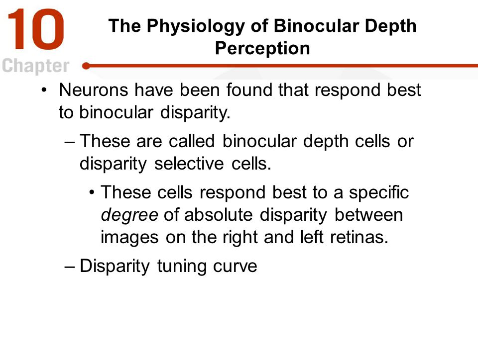 The Physiology of Binocular Depth Perception Neurons have been found that respond best to binocular disparity. –These are called binocular depth cells