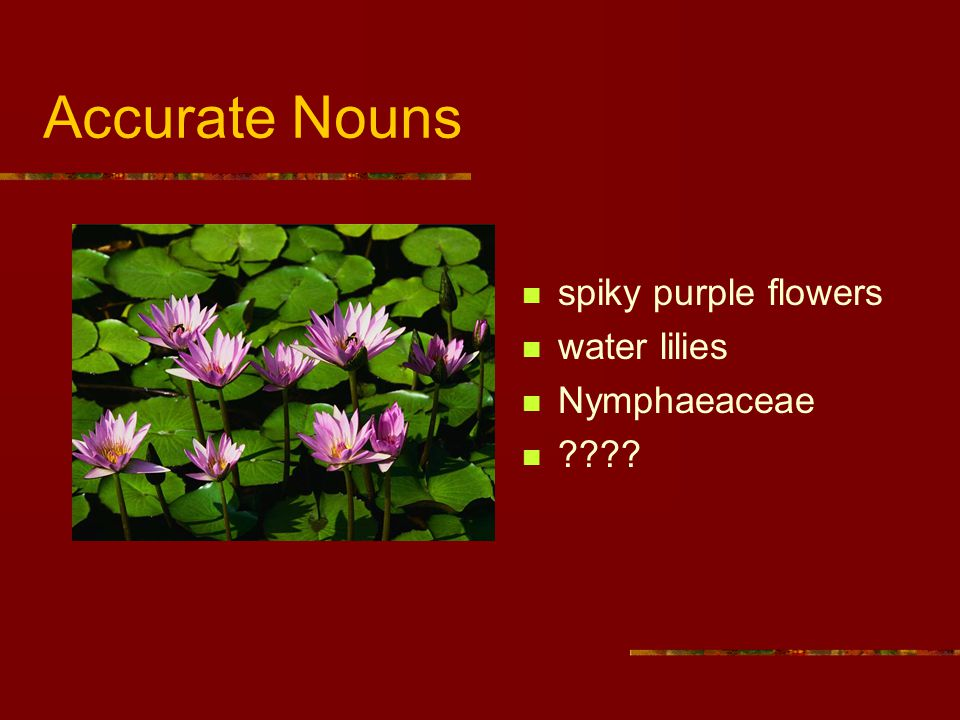 Accurate Nouns spiky purple flowers water lilies Nymphaeaceae ????