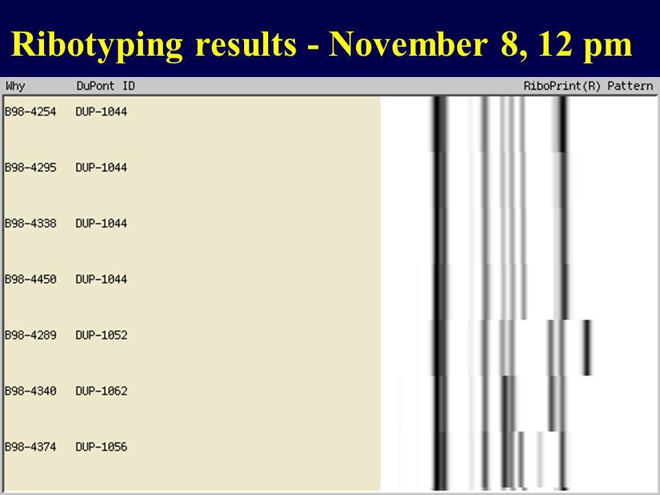 Ribotyping results - November 8, 12 pm