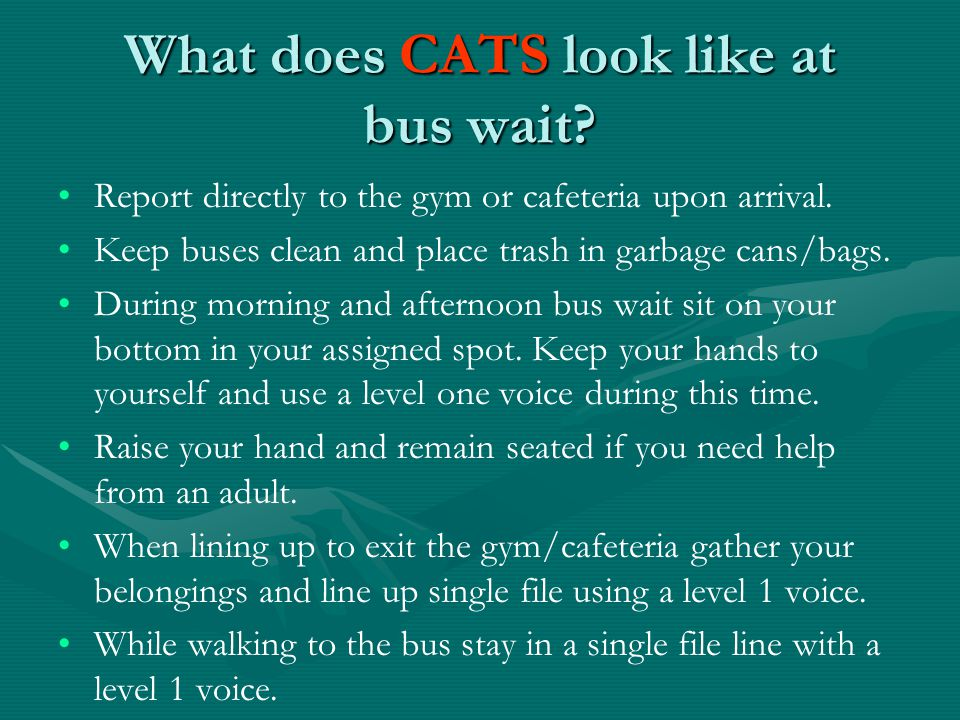 What does CATS look like at bus wait. Report directly to the gym or cafeteria upon arrival.