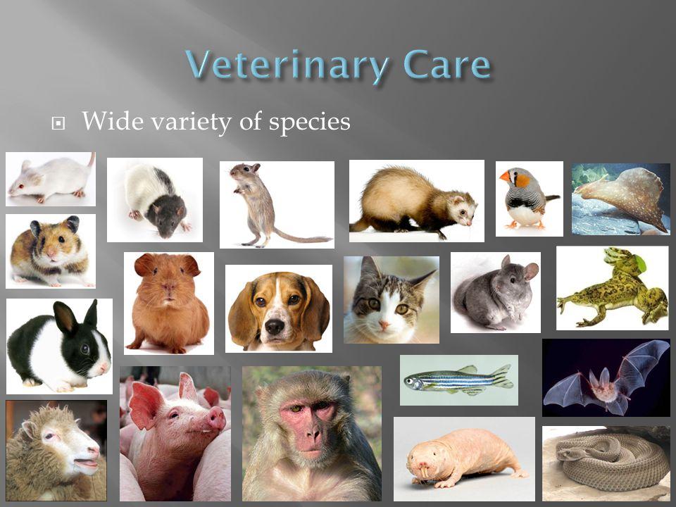 Wide variety of species