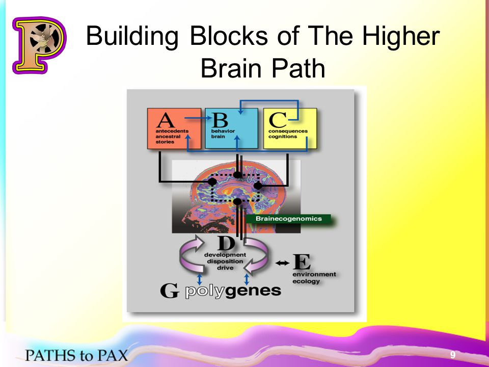 10 High Road Brain Strategy 1.Increase & Reinforce PAX behaviors 2.Stop Emotional dysregulation and increase self-regulation 3.Reduce uncertainty, stress and threats