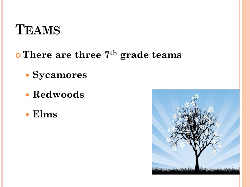 T EAMS There are three 7 th grade teams Sycamores Redwoods Elms