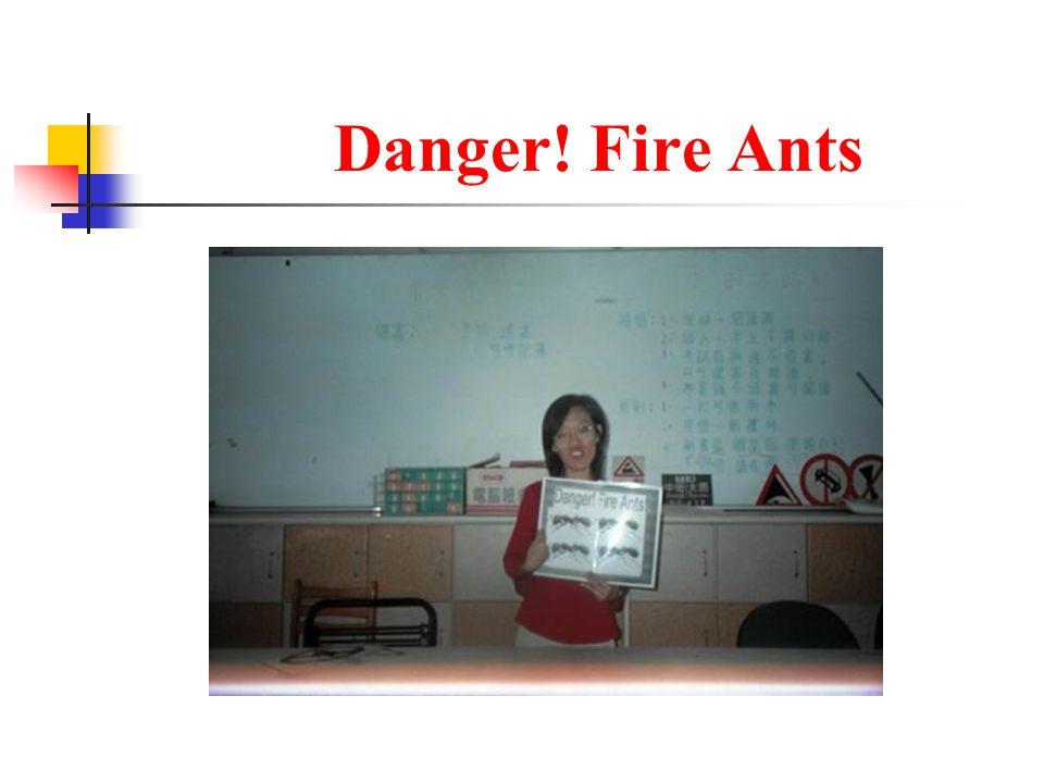 Danger! Fire Ants