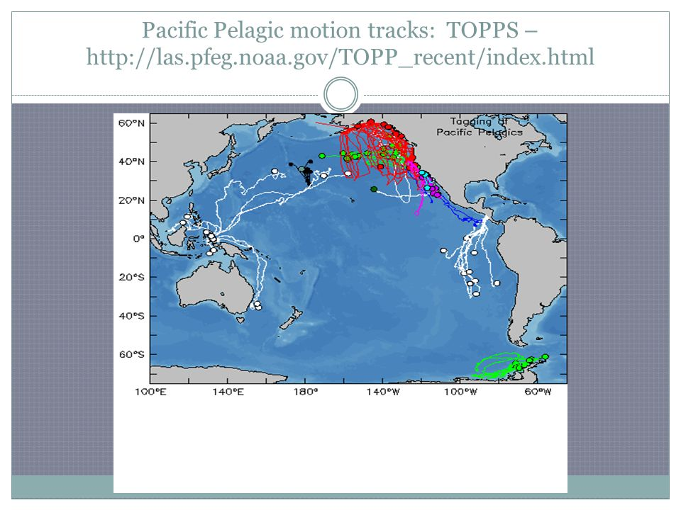 Pacific Pelagic motion tracks: TOPPS – http://las.pfeg.noaa.gov/TOPP_recent/index.html