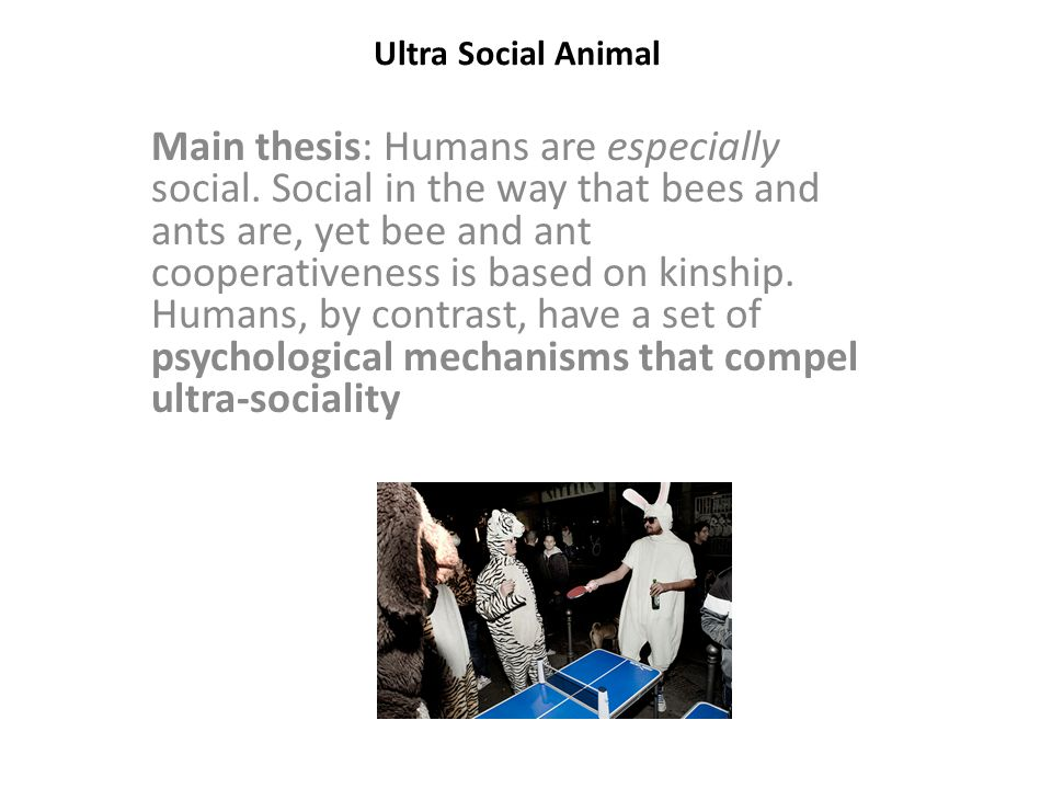 Ultra Social Animal Two step processes to ultra-sociality: Obligate cooperative foraging.