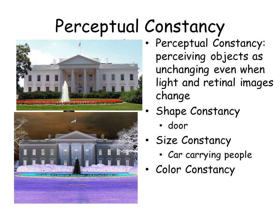 Perceptual Constancy Perceptual Constancy: perceiving objects as unchanging even when light and retinal images change Shape Constancy door Size Constancy Car carrying people Color Constancy