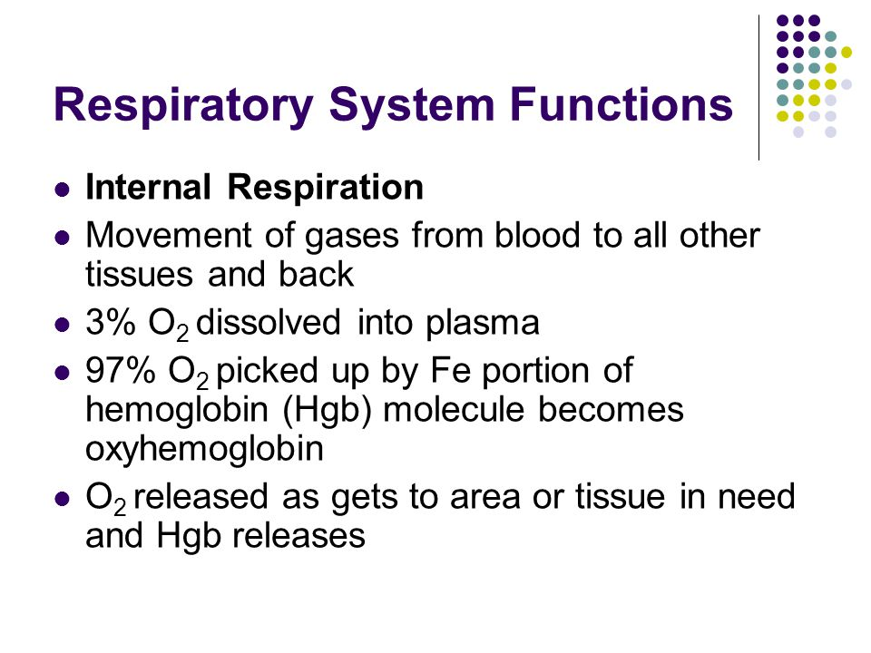 Respiratory System Functions Internal Respiration Movement of gases from blood to all other tissues and back 3% O 2 dissolved into plasma 97% O 2 picked up by Fe portion of hemoglobin (Hgb) molecule becomes oxyhemoglobin O 2 released as gets to area or tissue in need and Hgb releases