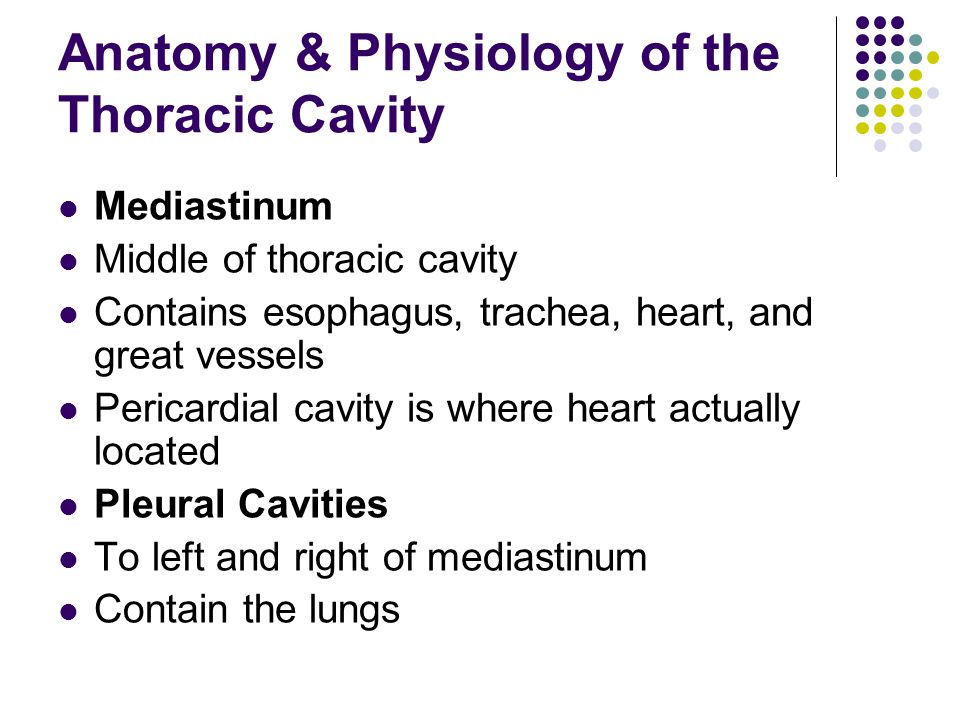 Anatomy & Physiology of the Thoracic Cavity Mediastinum Middle of thoracic cavity Contains esophagus, trachea, heart, and great vessels Pericardial cavity is where heart actually located Pleural Cavities To left and right of mediastinum Contain the lungs