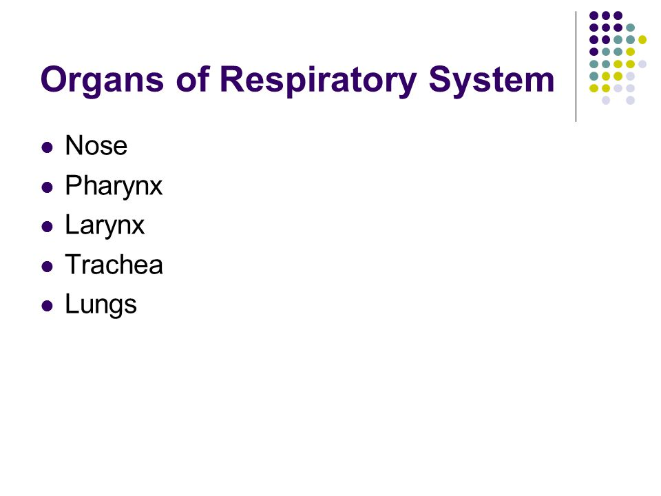 Organs of Respiratory System Nose Pharynx Larynx Trachea Lungs