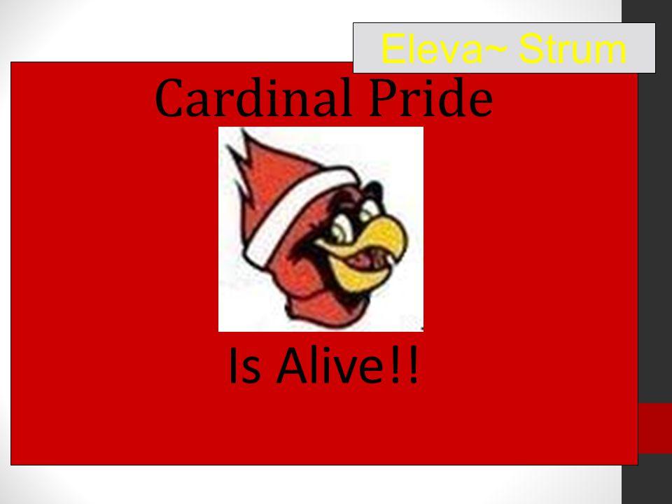 Cardinal Pride Is Alive!! Eleva~ Strum
