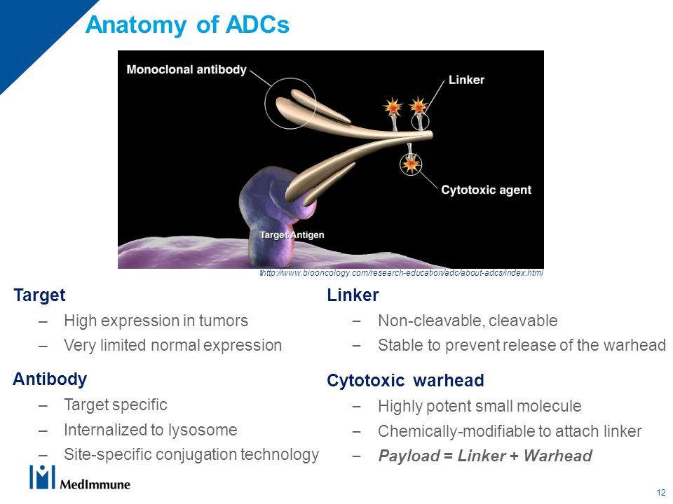 Target –High expression in tumors –Very limited normal expression Antibody –Target specific –Internalized to lysosome –Site-specific conjugation technology Anatomy of ADCs Linker – Non-cleavable, cleavable – Stable to prevent release of the warhead Cytotoxic warhead – Highly potent small molecule – Chemically-modifiable to attach linker – Payload = Linker + Warhead http://www.biooncology.com/research-education/adc/about-adcs/index.html 12