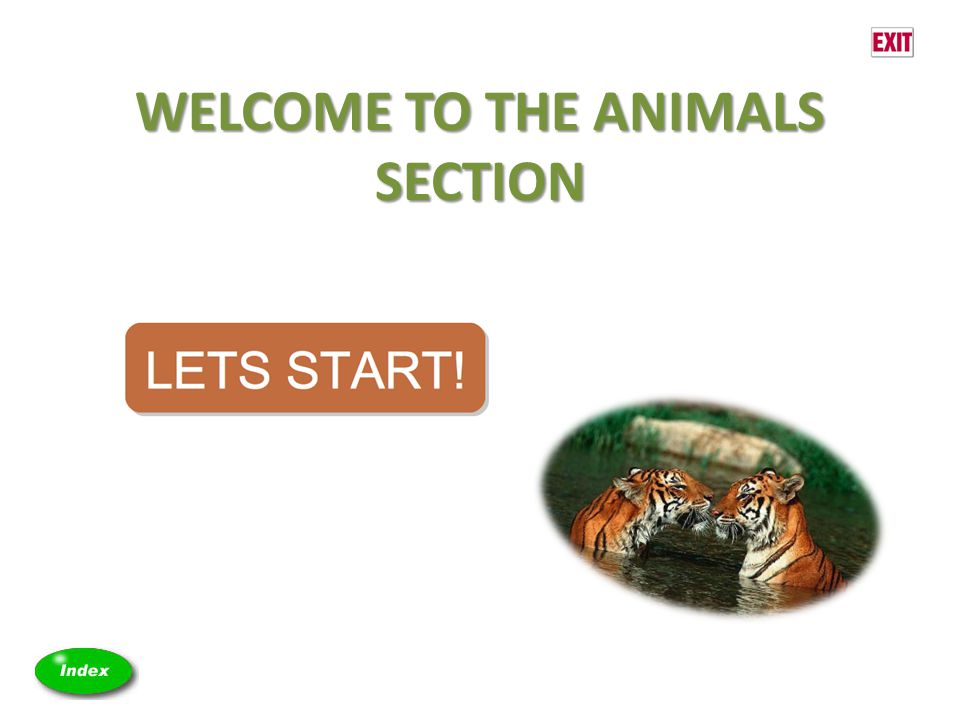 WELCOME TO THE ANIMALS SECTION
