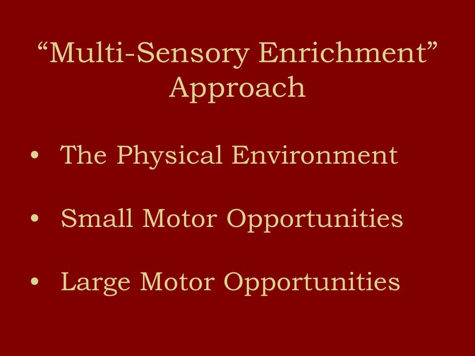 Multi-Sensory Enrichment Approach The Physical Environment Small Motor Opportunities Large Motor Opportunities
