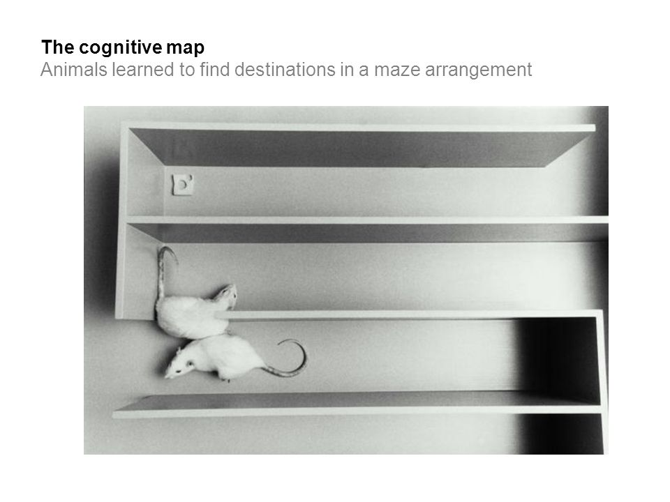 The cognitive map Animals learned to find destinations in a maze arrangement
