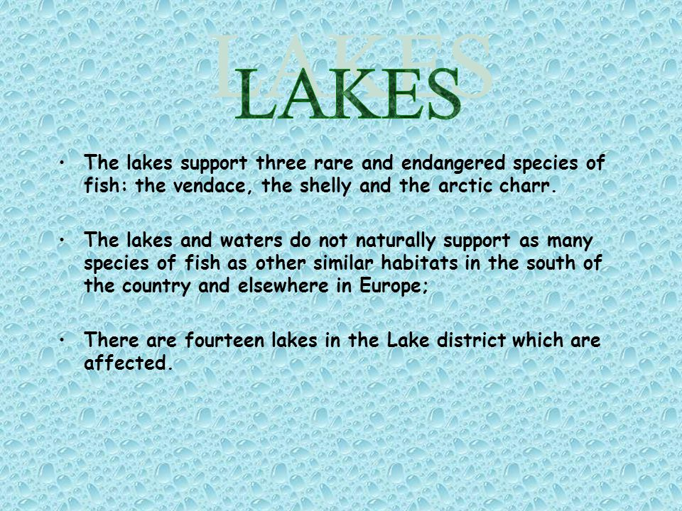 The lakes support three rare and endangered species of fish: the vendace, the shelly and the arctic charr.
