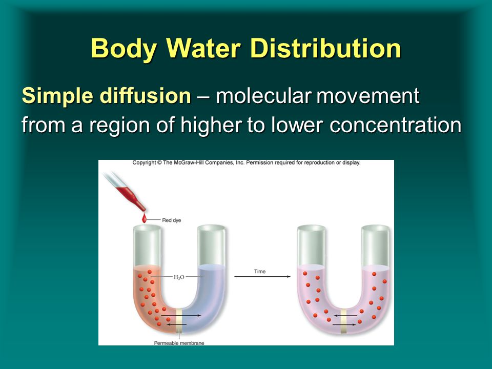 Body Water Distribution Simple diffusion – molecular movement from a region of higher to lower concentration Insert figure 9.1