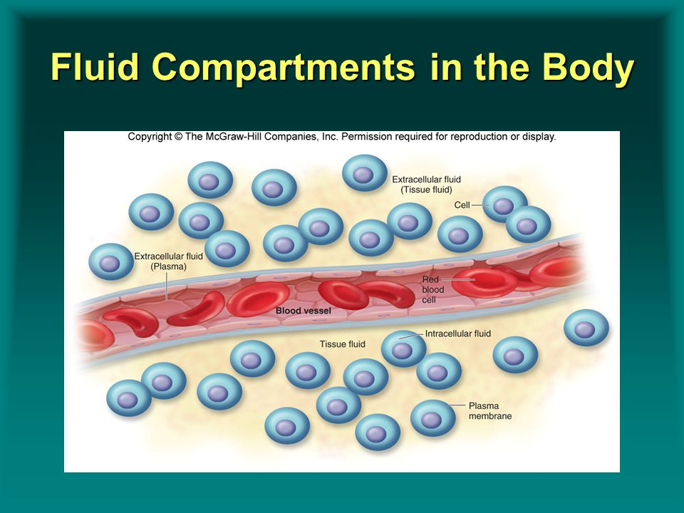 Fluid Compartments in the Body Insert Figure 9.3Insert Figure 9.3
