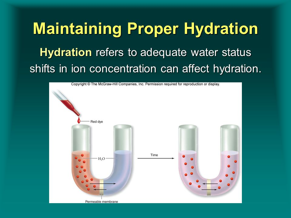 Maintaining Proper Hydration Hydration refers to adequate water status shifts in ion concentration can affect hydration. Insert figure 9.1