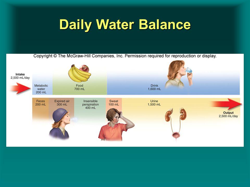 Daily Water Balance Insert figure 9.5