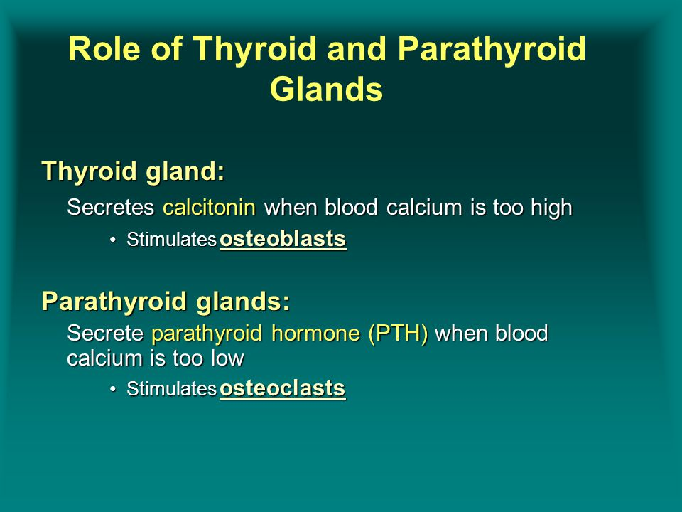 Thyroid gland: Secretes calcitonin when blood calcium is too high Stimulates osteoblastsStimulates osteoblasts Parathyroid glands: Secrete parathyroid hormone (PTH) when blood calcium is too low Stimulates osteoclastsStimulates osteoclasts Role of Thyroid and Parathyroid Glands
