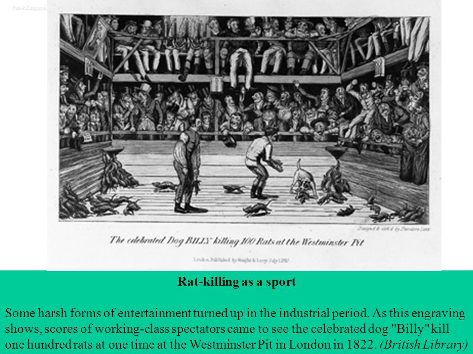 Rat-killing as a sport Some harsh forms of entertainment turned up in the industrial period. As this engraving shows, scores of working-class spectato