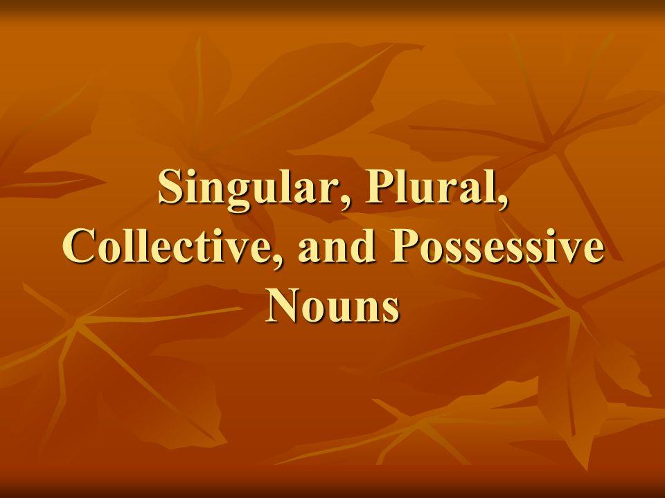 Singular, Plural, Collective, and Possessive Nouns