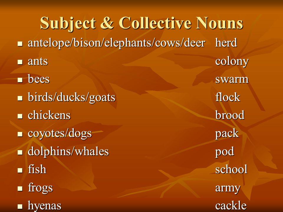 Subject & Collective Nouns antelope/bison/elephants/cows/deerherd antelope/bison/elephants/cows/deerherd antscolony antscolony beesswarm beesswarm bir