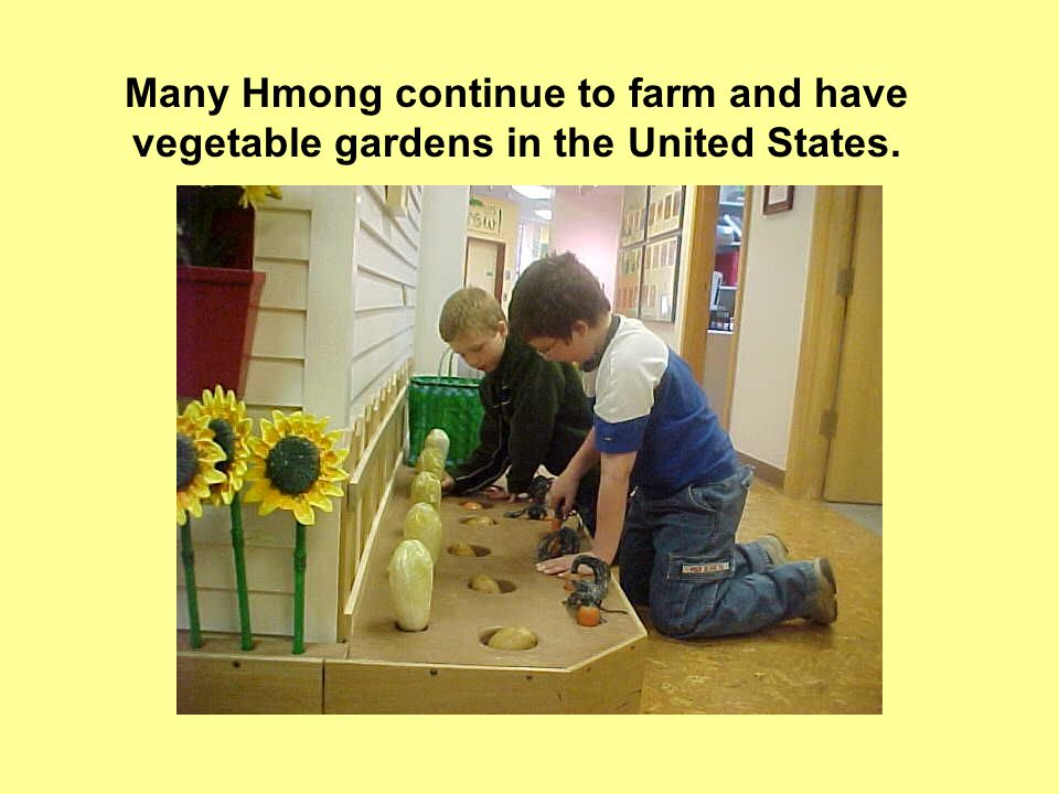 Many Hmong continue to farm and have vegetable gardens in the United States.