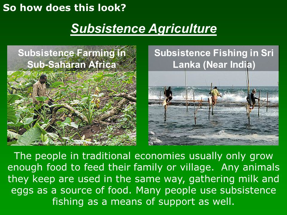 So how does this look? Subsistence Agriculture The people in traditional economies usually only grow enough food to feed their family or village. Any