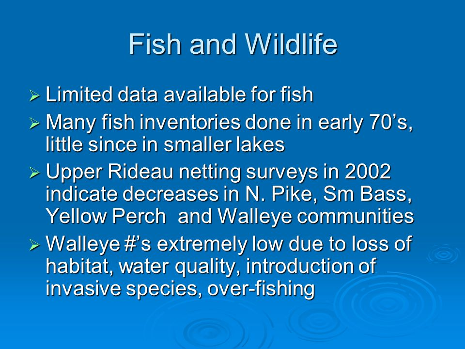 Fish and Wildlife  Limited data available for fish  Many fish inventories done in early 70's, little since in smaller lakes  Upper Rideau netting s