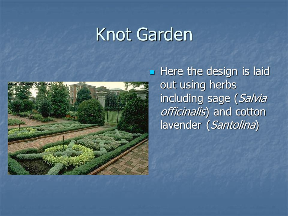 Knot Garden Here the design is laid out using herbs including sage (Salvia officinalis) and cotton lavender (Santolina) Here the design is laid out using herbs including sage (Salvia officinalis) and cotton lavender (Santolina)