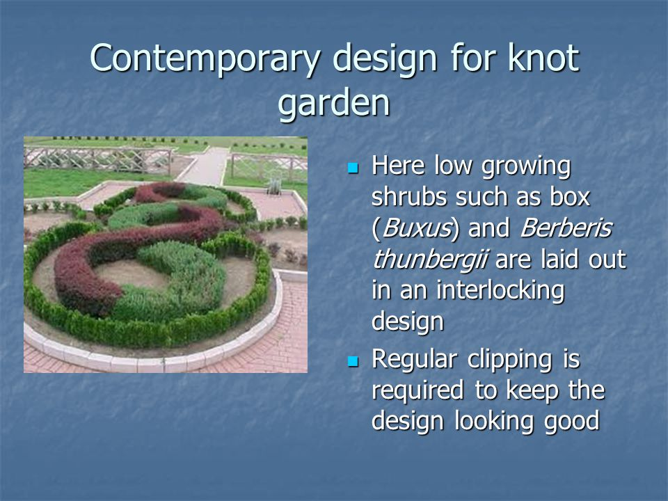 Contemporary design for knot garden Here low growing shrubs such as box (Buxus) and Berberis thunbergii are laid out in an interlocking design Here low growing shrubs such as box (Buxus) and Berberis thunbergii are laid out in an interlocking design Regular clipping is required to keep the design looking good Regular clipping is required to keep the design looking good