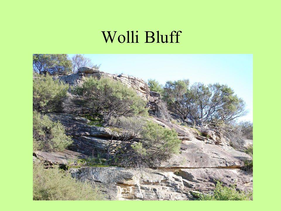 Wolli Bluff