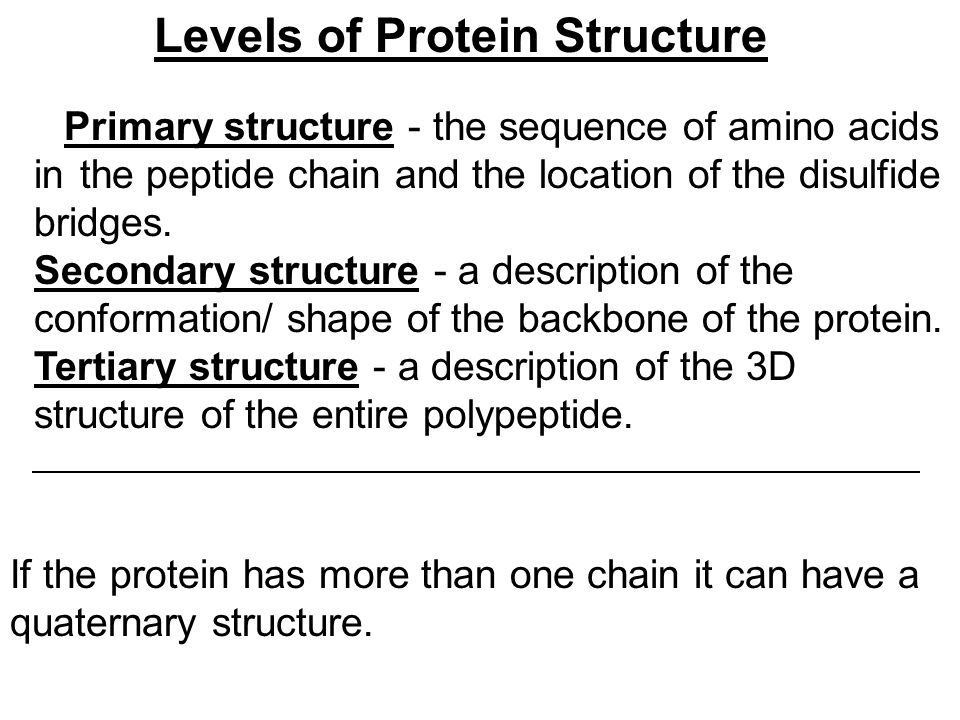 Levels of Protein Structure Primary structure - the sequence of amino acids in the peptide chain and the location of the disulfide bridges.