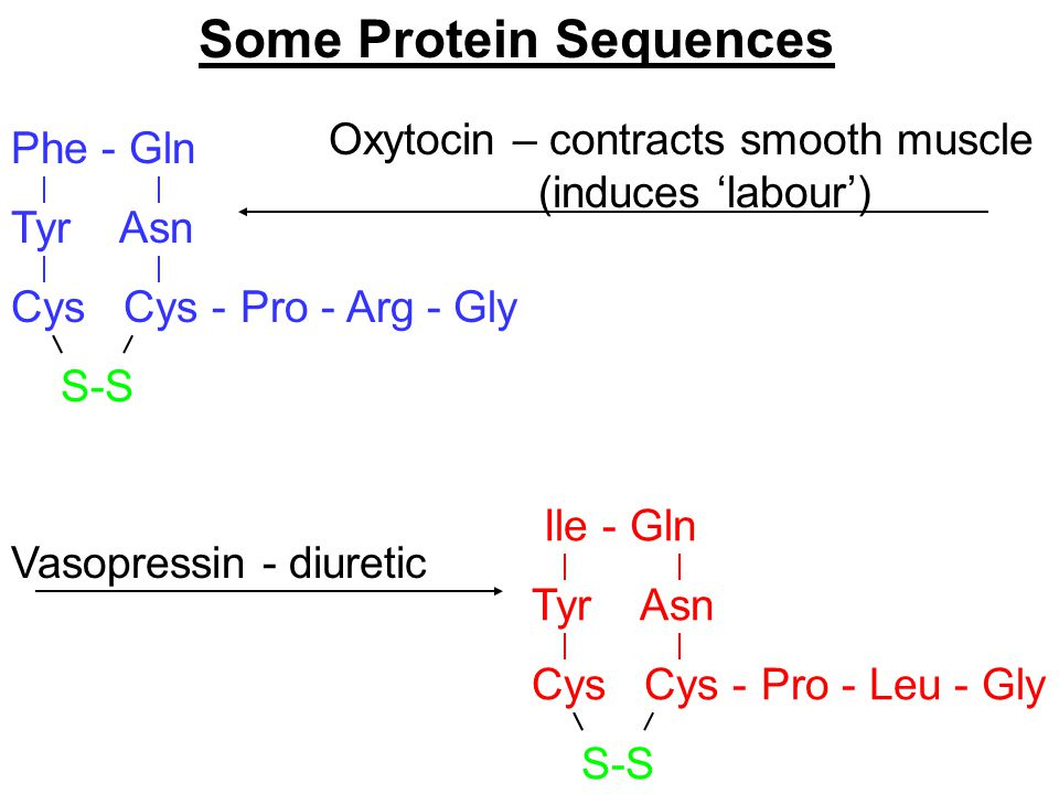 Some Protein Sequences Phe - Gln Tyr Asn Cys Cys - S-S Pro - Arg - Gly Ile - Gln Tyr Asn Cys Cys - S-S Pro - Leu - Gly Oxytocin – contracts smooth muscle (induces 'labour') Vasopressin - diuretic
