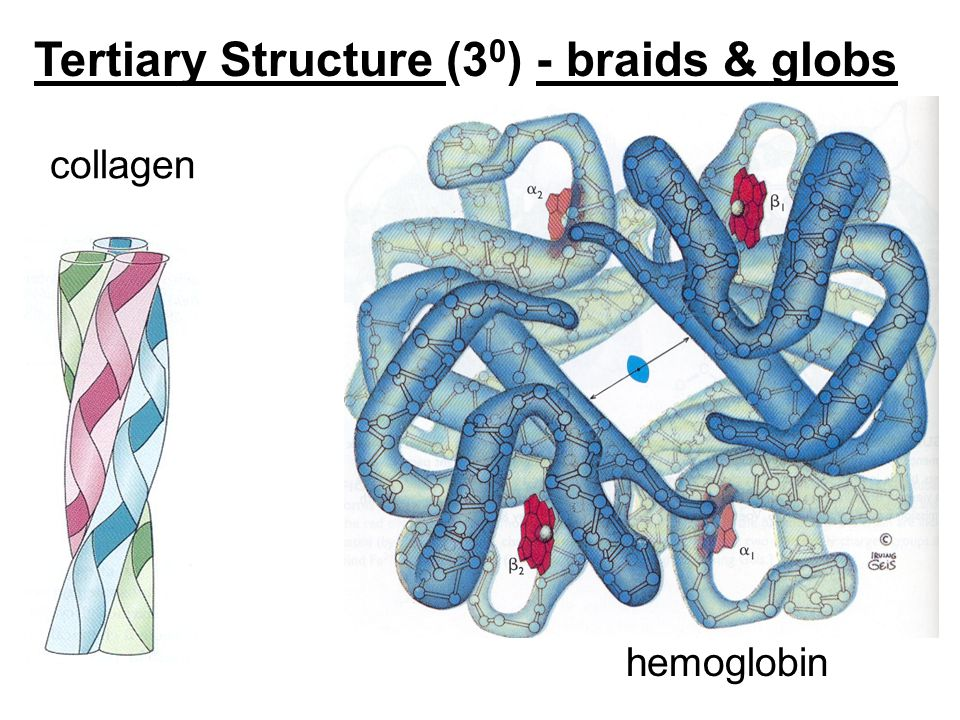 Tertiary Structure (3 0 ) - braids & globs collagen hemoglobin