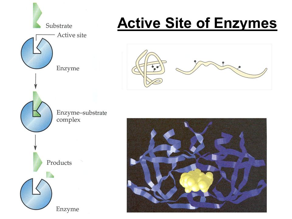 Active Site of Enzymes